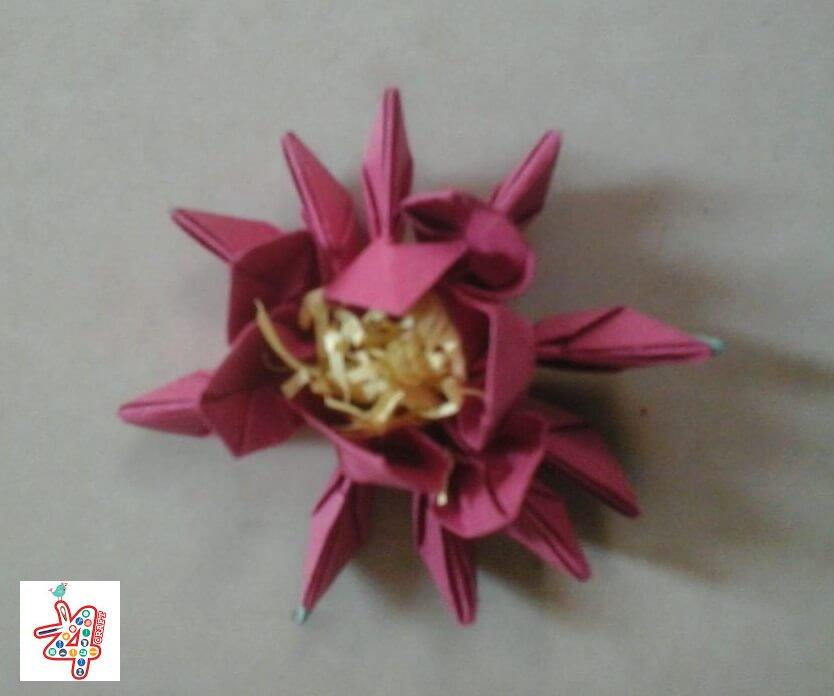 lotus-15