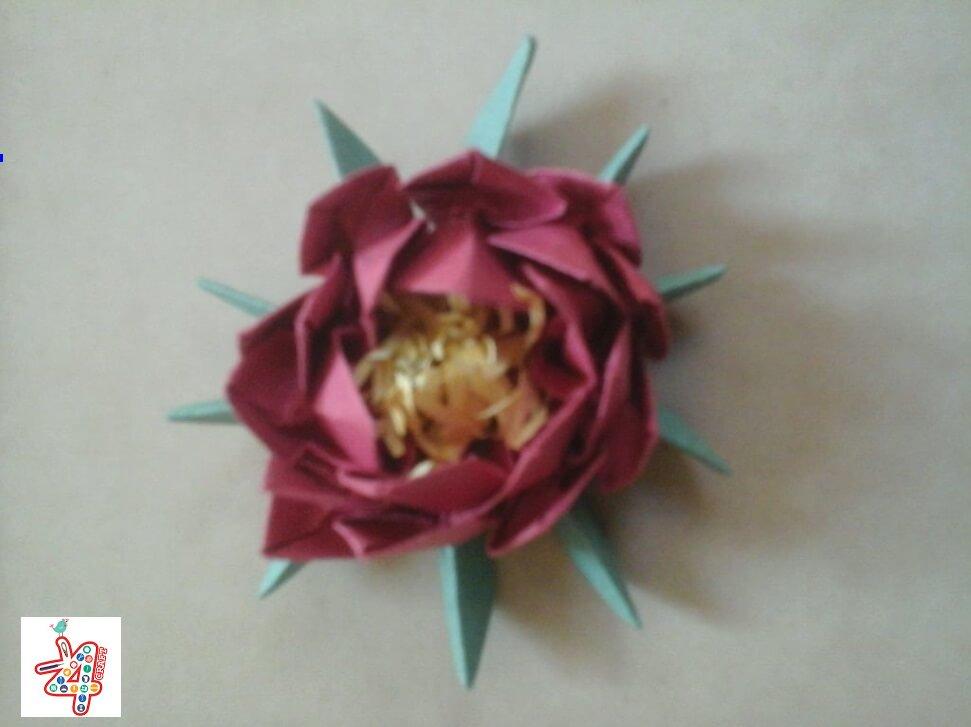 lotus-16
