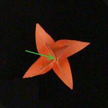 origami-paper-tulip-20